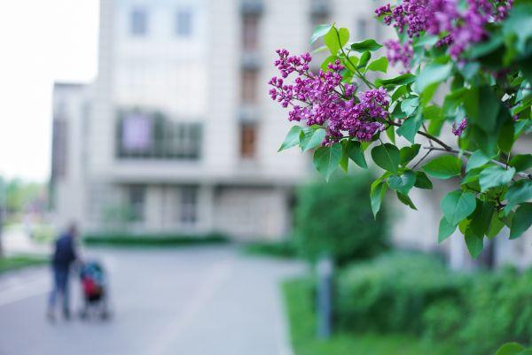 3-я Фотография ЖК «Виноградный»
