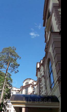 Сосны Николина гора
