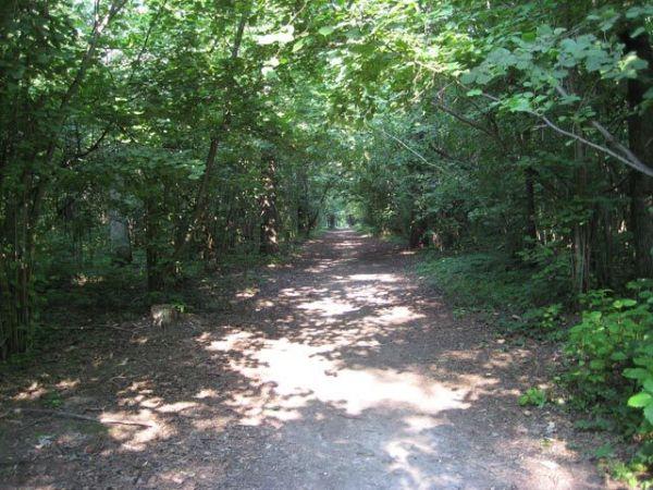 8-я Фотография ЖК «Лесной уголок»
